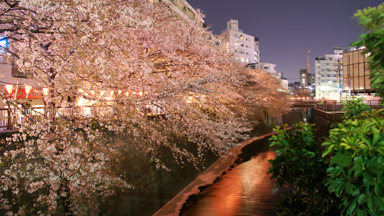 Meguro River by Shuichi Aizawa cropped