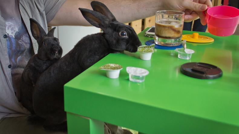 Resultado de imagen para Rabbit Café tokyo