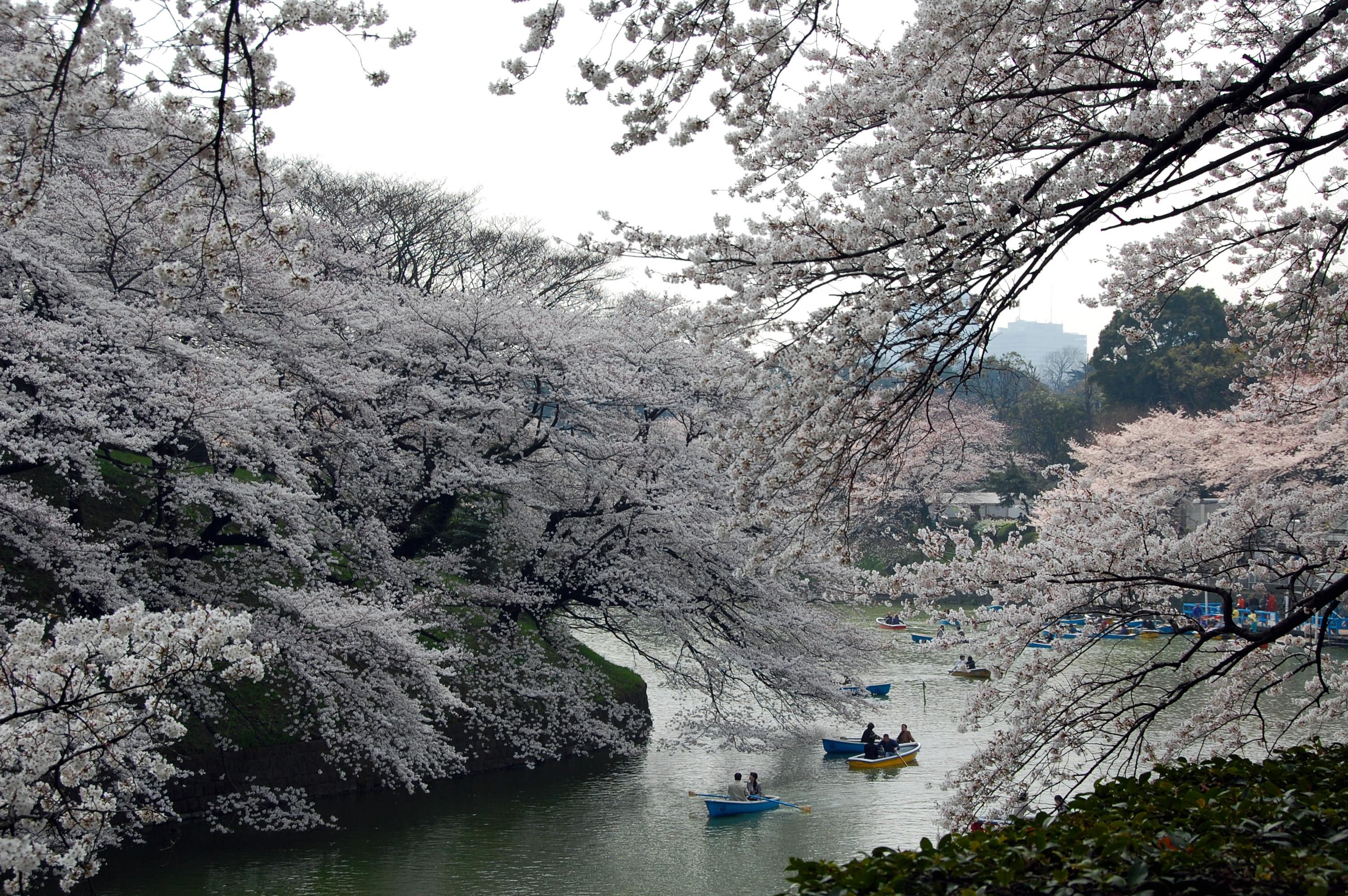 chidori by kanegen
