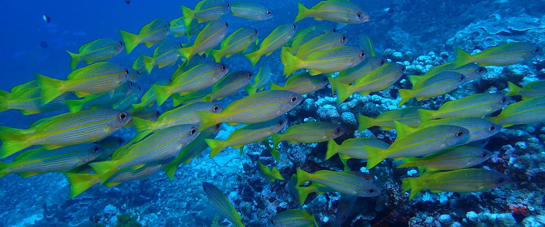 Thailand 39 s treasures beneath the andaman sea savvy tokyo for Andaman healthy thai cuisine