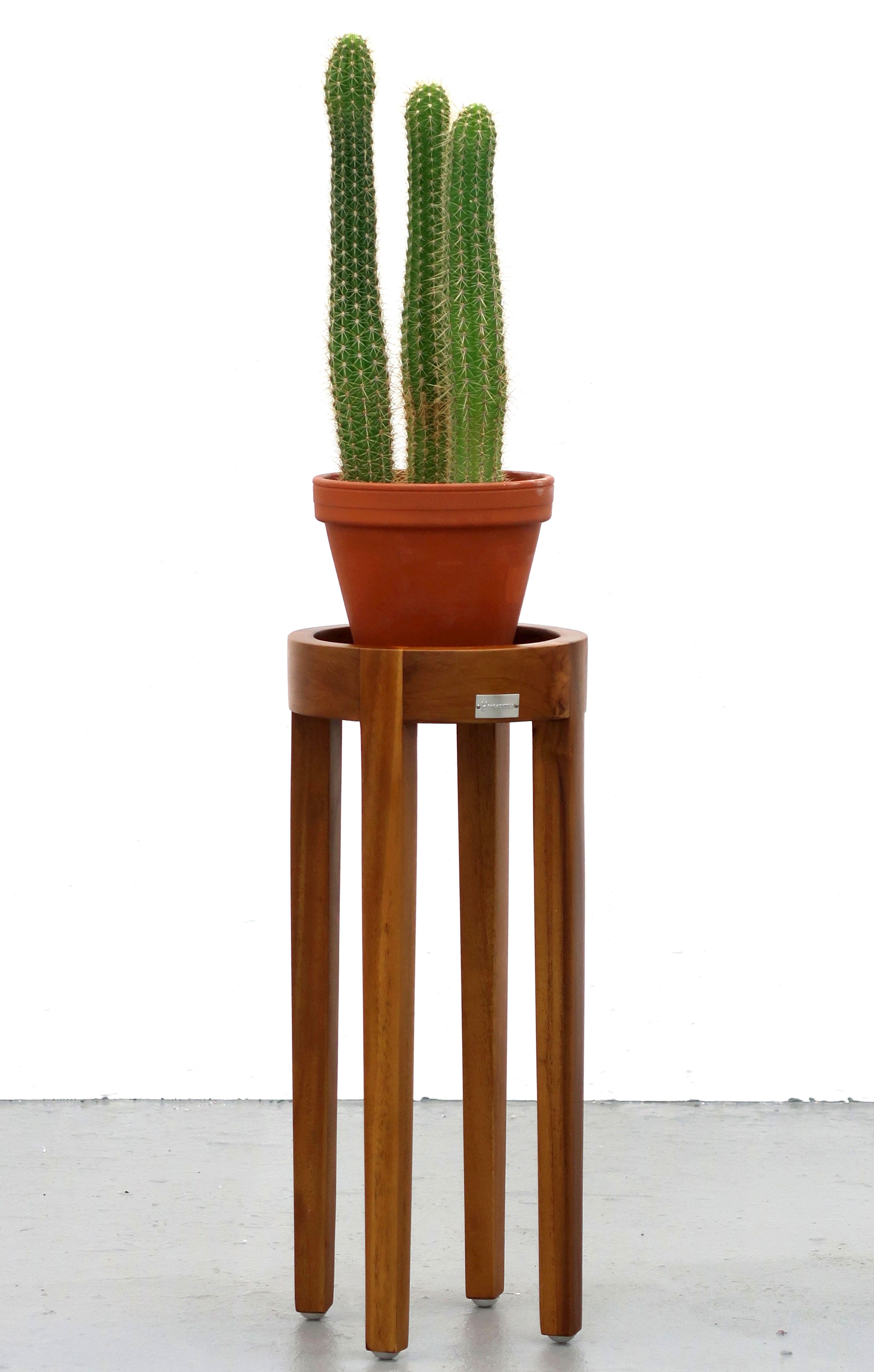 plant1-copy-copy