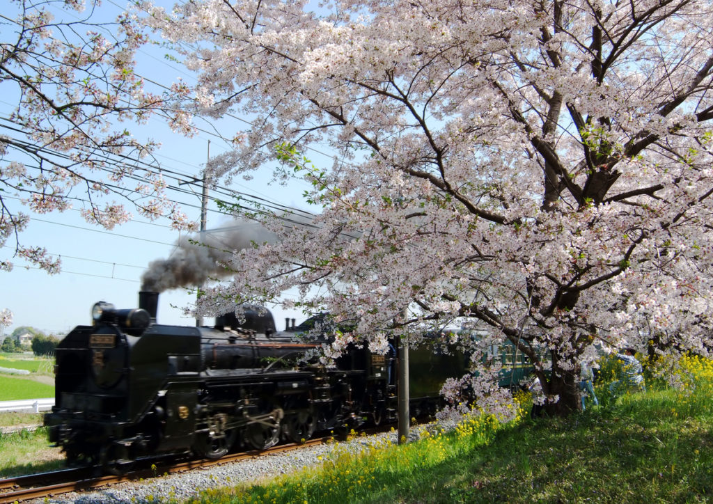 Cherry blossom line dating romance